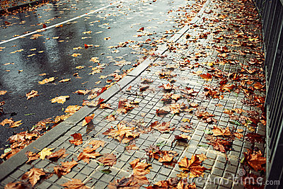 Wet road and fallen leaves