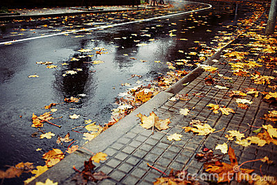 Wet road and leaves