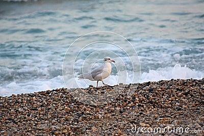 Wet sea stones whith sea bird.