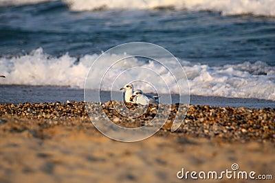 Wet sea stones whith sea birds.