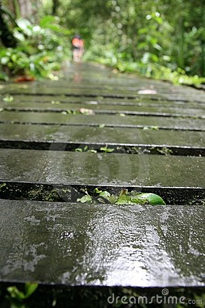 Wet and slippery wooden path