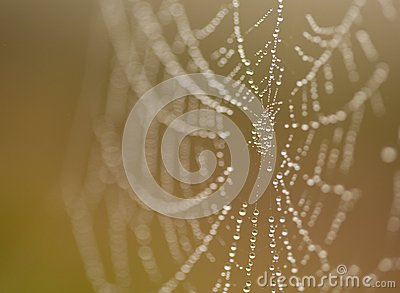 Wet Spider Web in The Morning Mist