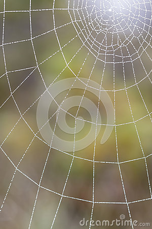 Wet spiderweb