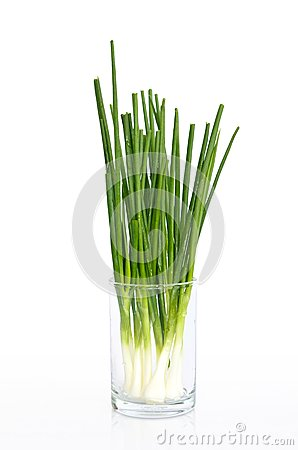 Wet spring onion in a glass