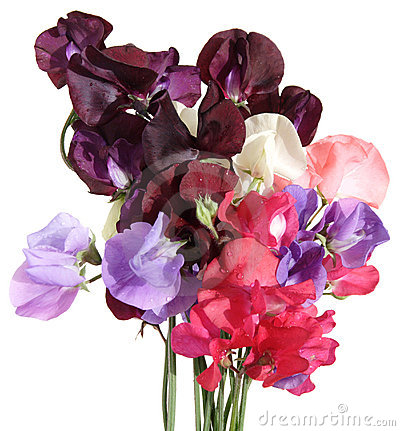 Wet sweet pea bouquet