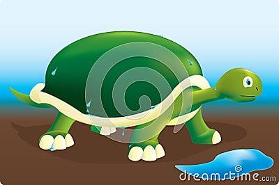Wet turtle