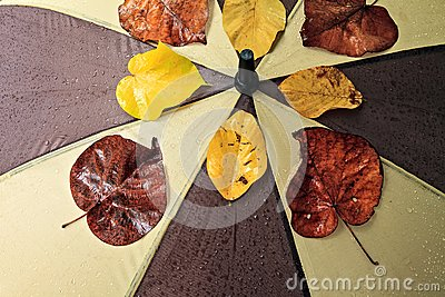 Wet umbrella