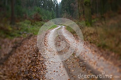 Wet Winding Wood Path Royalty Free Stock Image - Image: 7696906