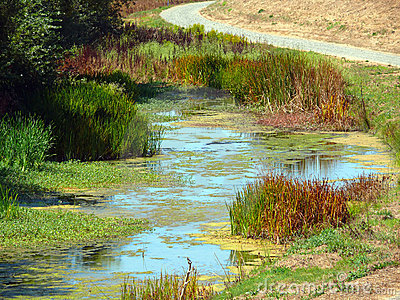 Wetland in the Bay Area