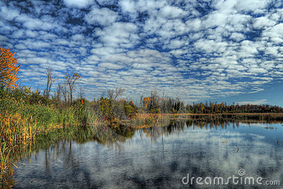 Wetland in HDR