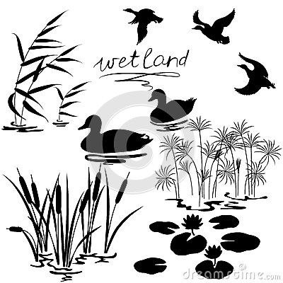 Free Wetland Plants And Birds Set Royalty Free Stock Photos - 46884888