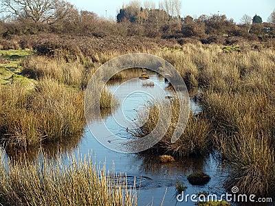 Wetland Water Channel