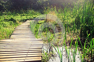 Wetland Wooden Bridge