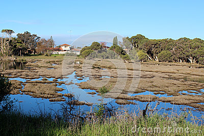 Wetlands at Big Swamp Bunbury Western Australia in late winter.