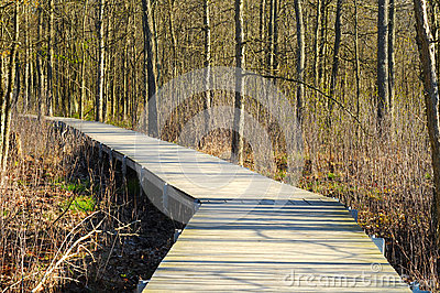 Wetlands boardwalk