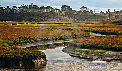 Wetlands, Cardiff, California
