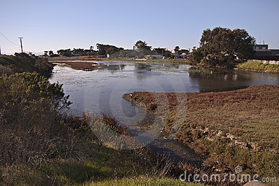 Wetlands on Monterey Bay