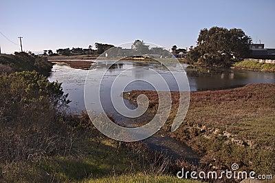 Wetlands on Monterey Bay