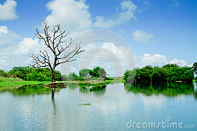 Wetlands with reflection of tree and sky