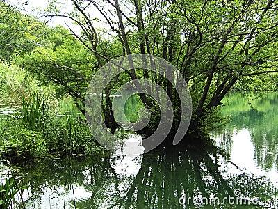 Wetlands or swamp