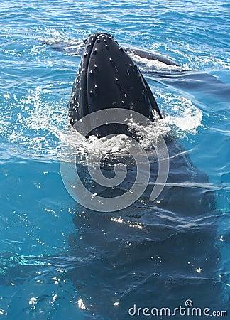 Free Whale Stock Photos - 3191683