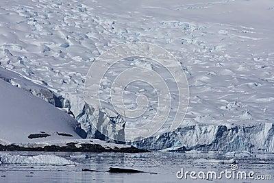 Whale in Paradise Harbor, Antarctica