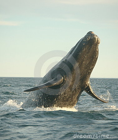 Free Whale Power Royalty Free Stock Image - 8269496
