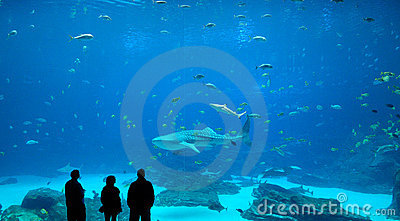 Whale Shark Editorial Photography