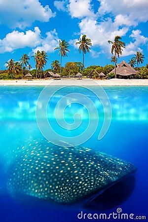 Whale shark below