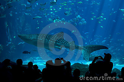 Whale Shark Spectators at The Aquarium Editorial Stock Image