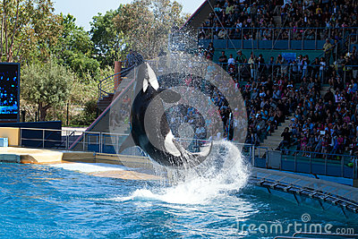 Whale Show Editorial Photo