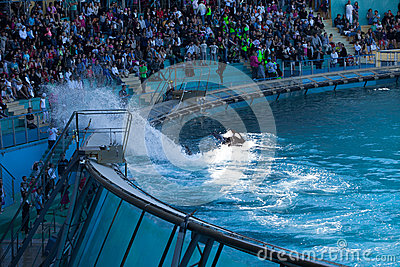 Whale Show Editorial Photography