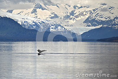 Whale tail against icy mountains