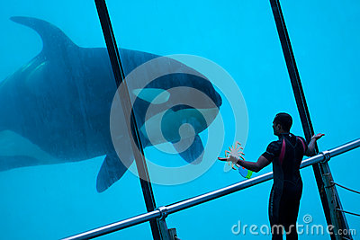 Whale Trainer Editorial Stock Photo