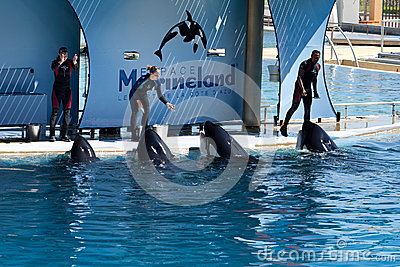 Whale Trainers Editorial Image