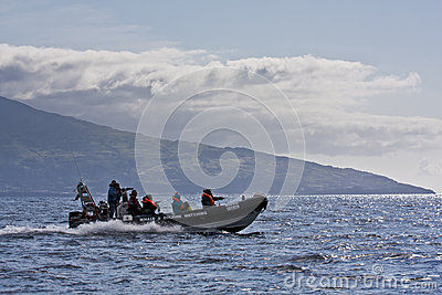 Whale watching Editorial Stock Photo