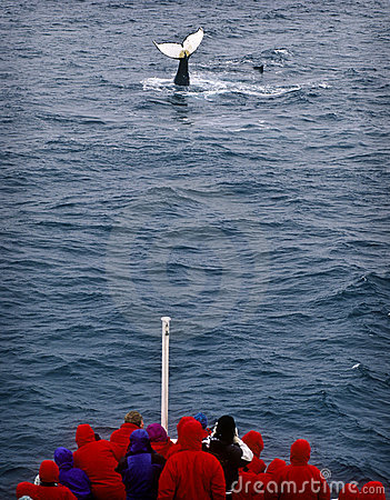 Free Whale Watching, Antarctica Stock Image - 15100811