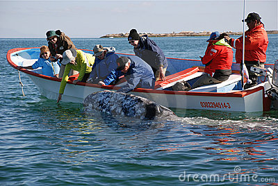 Whale watching San Ignacio Lagoon Baja California Editorial Photo