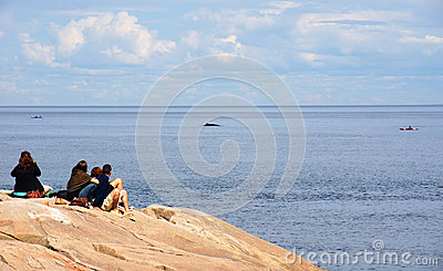 Whale watching from shore Editorial Image