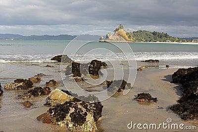 Whangapoua shoreline New Zealand