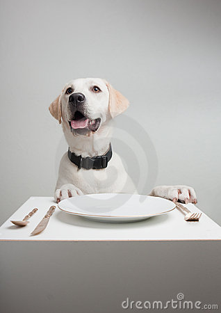 What s for dinner?