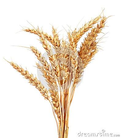 Free Wheat Royalty Free Stock Image - 53499796