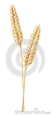 Free Wheat Stock Photos - 96199233