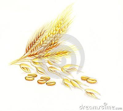 Wheat and barley