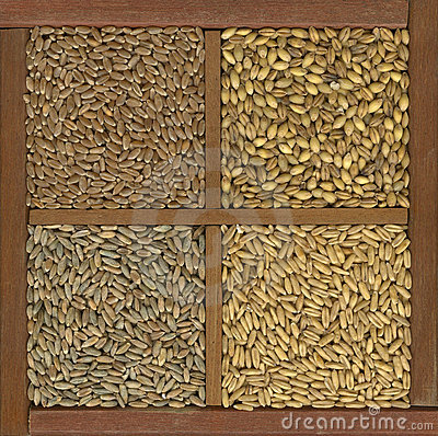 Free Wheat, Barley, Oat And Rye Grain Royalty Free Stock Photo - 9586575