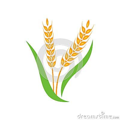 Free Wheat Barley Spike Yellow Isolated On White Background. Royalty Free Stock Image - 98294056