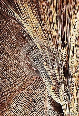 Wheat border