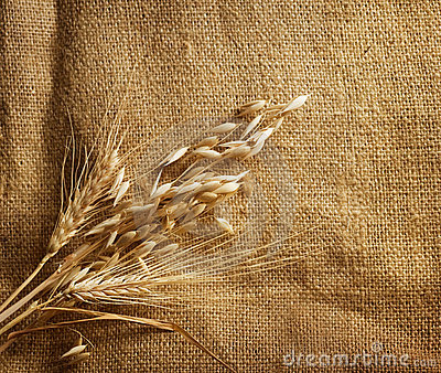 Wheat on burlap