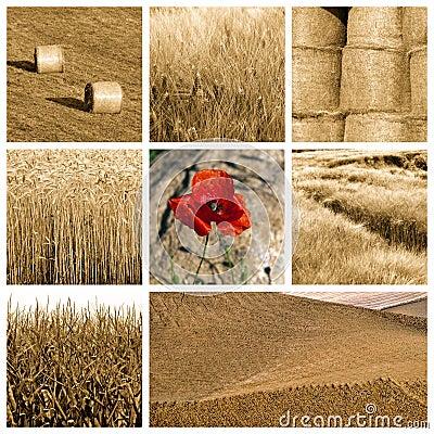 Free Wheat Collage Stock Photos - 16455363
