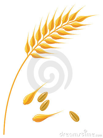 Wheat Stock Illustrations – 25,079 Wheat Stock Illustrations ...